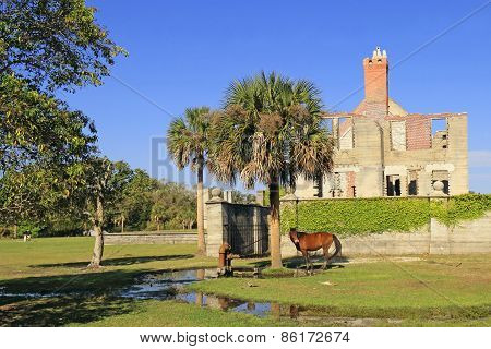 Wild Horse in front of Dungeness Ruins Historical Site - Cumberland Island, Georgia