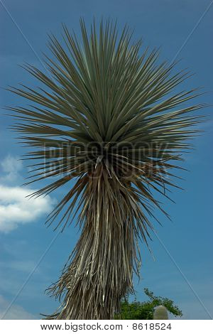Cactus With Rounded Shape Leaves. Cactus Against Blue Sky.