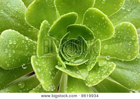 Wild plant covered with raindrops