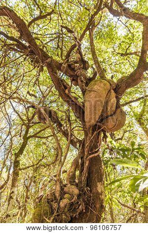Art On Tree