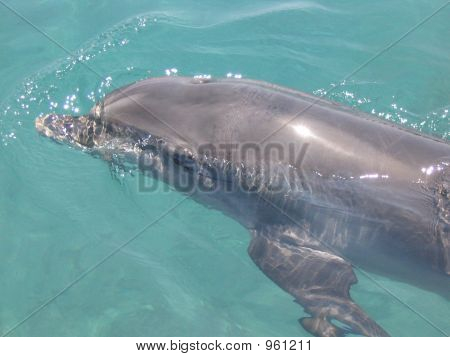 Dolphin Eilat