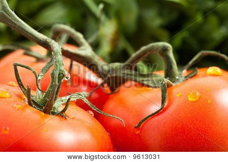 Tomato With Parsely