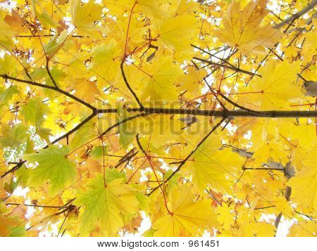 Background From Yellow Autumn Leaves And Branches
