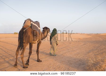 The Arabian Guide Lead Camel In Sahara Desert