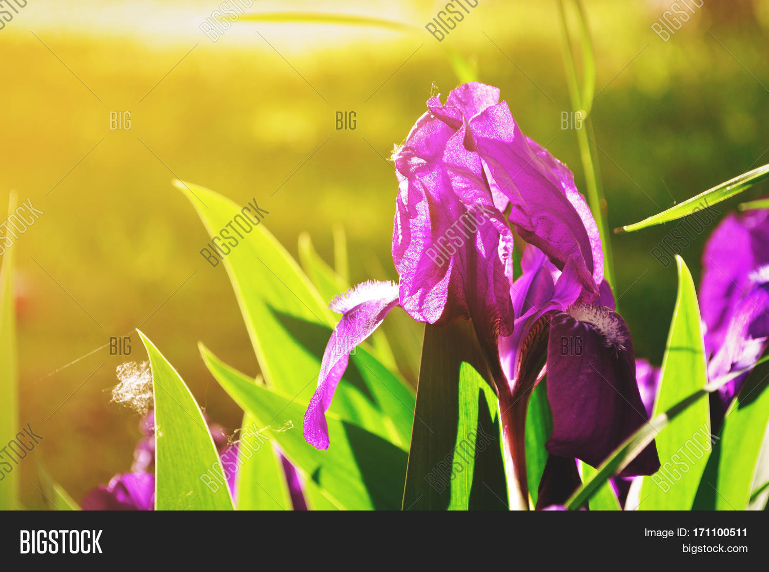 Spring Flower Image Photo Free Trial Bigstock