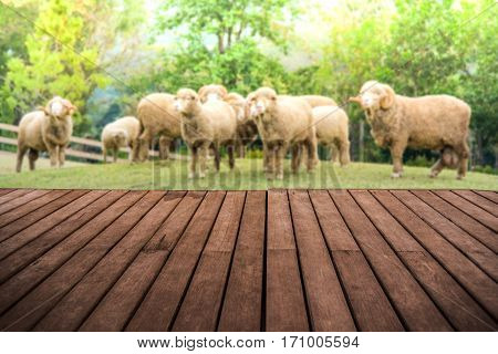 Perspective Empty Wooden Terrace With Angora Goat Background