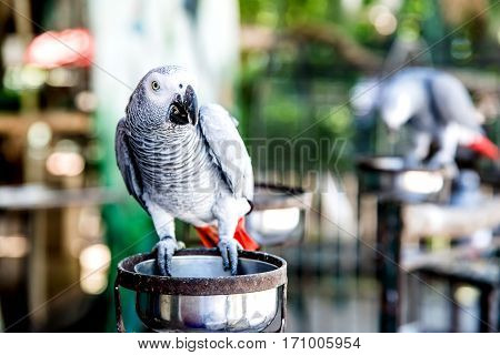 Parrot is a lovely bird animal and pet