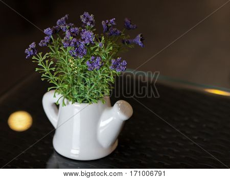 SMALL PLANT POTTED IN WATERING POT ON TABLETOP
