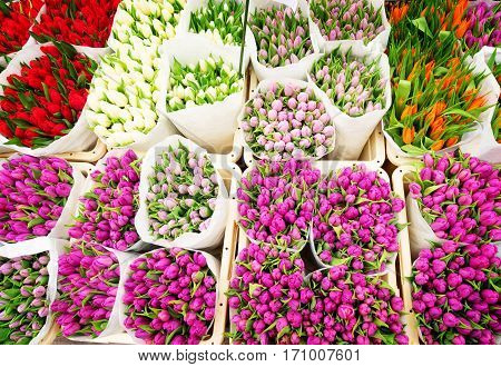 Tulip flowers from Netherlands for sale , Amsterdam floral market, retro toned