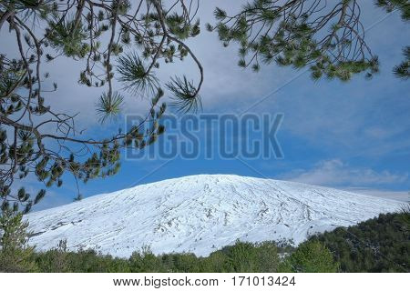 snow covered Etna Mount framed by needles pine tree, Sicily