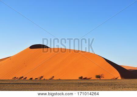 Beautiful landscape with huge red dune 45 and trees at sunrise Sossusvlei Namib Naukluft National Park Namibia