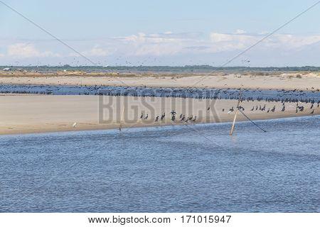 Heron And Neotropic Cormorants On The Beach