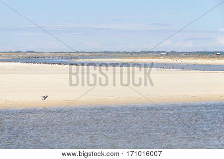 Neotropic Cormorant bird resting in Tavares beach