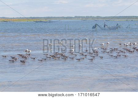 Black Skimmers And Seagulls At Lagoa Do Peixe