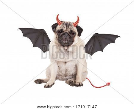 devilish cute pug puppy dog sits dressed up as devil for Halloween isolated on white background
