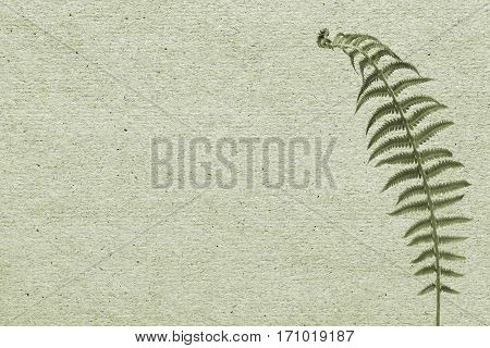 Vintage paper background with green leaf fern.
