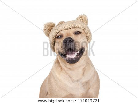 portrait of adorable happy cute dog laughing and smiling with knitted hat with pompoms isolated on white background