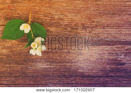 Jasmine fresh flowers and leaves twig on wooden table, retro toned
