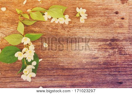 Jasmine fresh flowers and leaves on wooden table, retro toned
