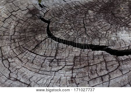 Close up of nature art, Old wood background