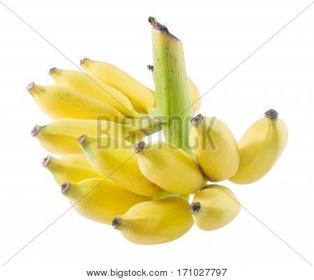 Fruits Bunch of Ripe and Sweet Yellow Wild Asian Bananas or Cultivated Banana Isolated on White Background.