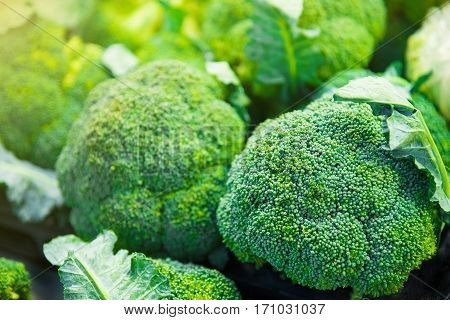 Group of broccoli heads on trays in supermarket healthcare diet food vegetable vegetarian vegan concept closeup and selective focus
