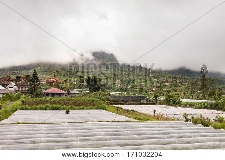 Panorama view on agricultural fields. Strawberry fields near Batur volcano Kintamani. Winter rainy and cloudy season. Bali Indonesia