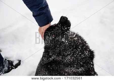 Black Mongrel Dog On A White Snow