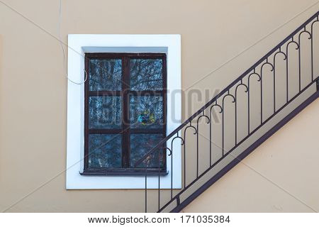 Window with a white frame. Reflection of a tree and blue sky. Fish as a decoration in the window. Diagonal handrail of the staircase.
