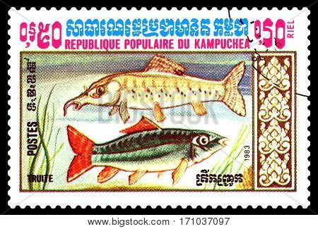 STAVROPOL RUSSIA - February 10 2017 : A Postage Stamp Printed in the Cambodia Shows fish trout circa 1983