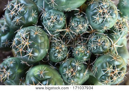 Close-up group of cactus in the garden
