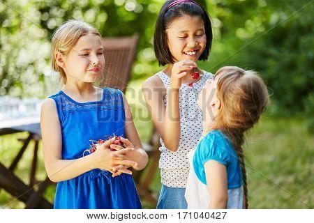 Children eating fresh cherries together in summer in the garden
