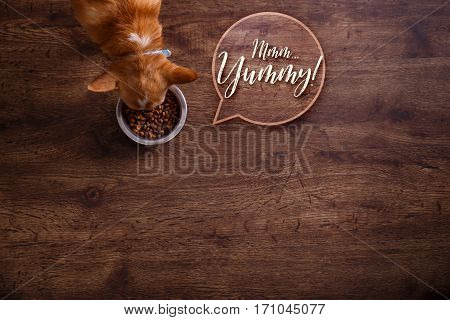 Chihuahua dog eat feed. Bowl of dry kibble food. Mmm yummy speech bubble. Healthy pets meal. Blue plate on wooden rustic background.