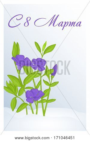 Beautiful congratulation or greeting card for women's day with Periwinkle in snow. Russian translation: 8 March. Holiday greetings background in simple cartoon style. Vector illustration. Flower Collection.