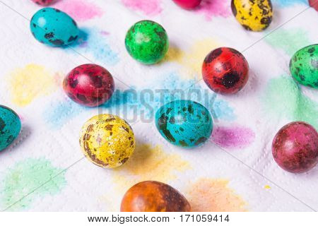 Color quail eggs on the color paper background
