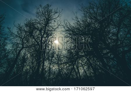 Image of a dark forest silhouetted in the light.