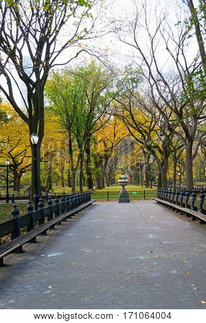 Canopy Of American Elms In Central Park
