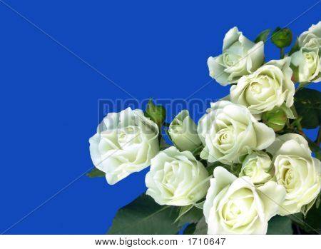 White Rose Bouquet On Blue Background
