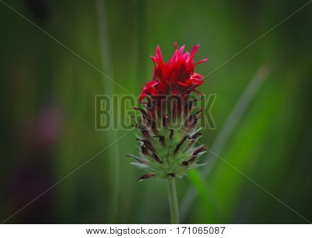 Small red petals show up on a flower