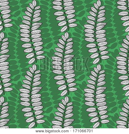 Seamless pattern with acacia leaves. Vector green nature background for packaging, textile and fabric design.