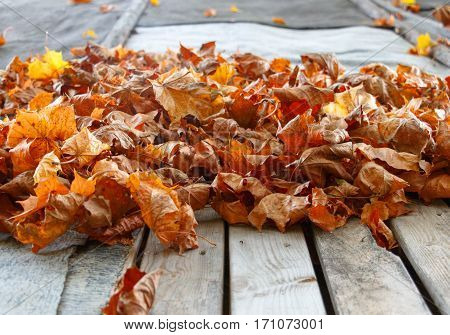 colorful autumn leaves on the old wooden surface