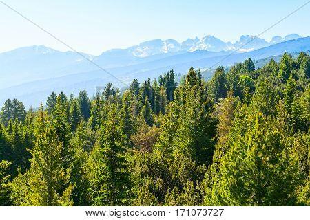 Spring green pine trees and snow Rila mountains by Rila Lakes in Bulgaria