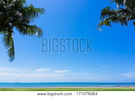 Summer Background, Coconut Palm Tree Against Blue Sky In Tanjung Aru Beach, Kota Kinabalu, Sabah Bor