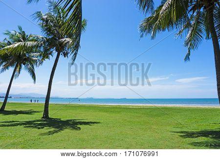 Beach view with coconut palm tree against blue sky in Tanjung Aru beach Kota Kinabalu Sabah Borneo Malaysia.