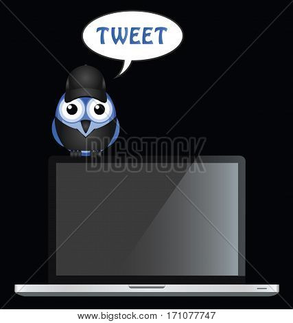 Comical bird tweet perched on a laptop with copy space for own text or graphics on laptop blank screen