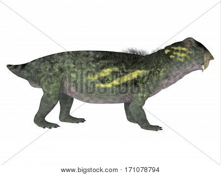 Lystrosaurus Side Profile 3d illustration - Lystrosaurus was a dicynodont therapsid dinosaur that lived in the Permian and Triassic Periods of Antarctica India Africa China Mongolia and Russia.