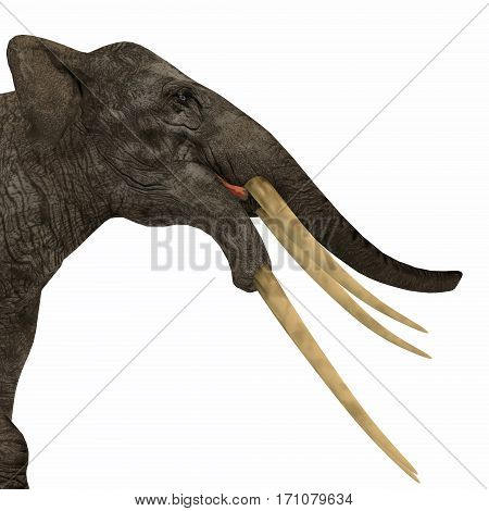 Stegotetrabelodon Elephant Head 3d illustration - Stegotetrabelodon was an elephant that lived in the Miocene and Pliocene Periods of Africa and Eurasia.