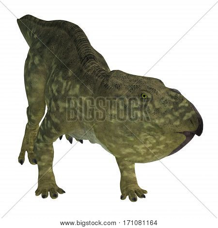 Udanoceratops Dinosaur on White 3d illustration - Udanoceratops was a Ceratopsian herbivorous dinosaur that lived in Mongolia in the Cretaceous Period.