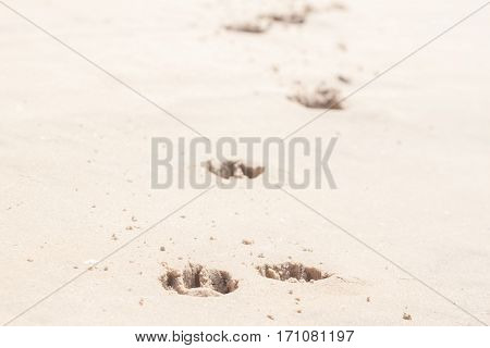 dog footprints in the sand can be background