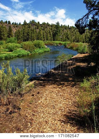 The beautiful blue Deschutes River winds a through the woods alongside a nature trail near the town of Tumalo Oregon on a nice summer day.